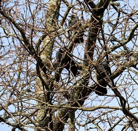 Naakat puussa