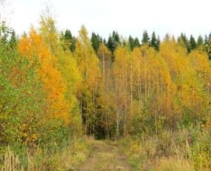 Kävellen kohti syksyä. Walking towards the autumn.