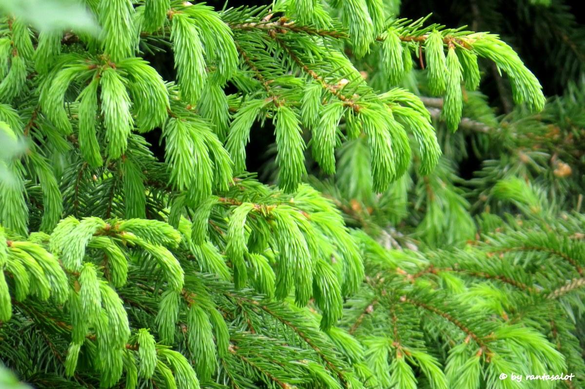 Vihreät sormet.jpg