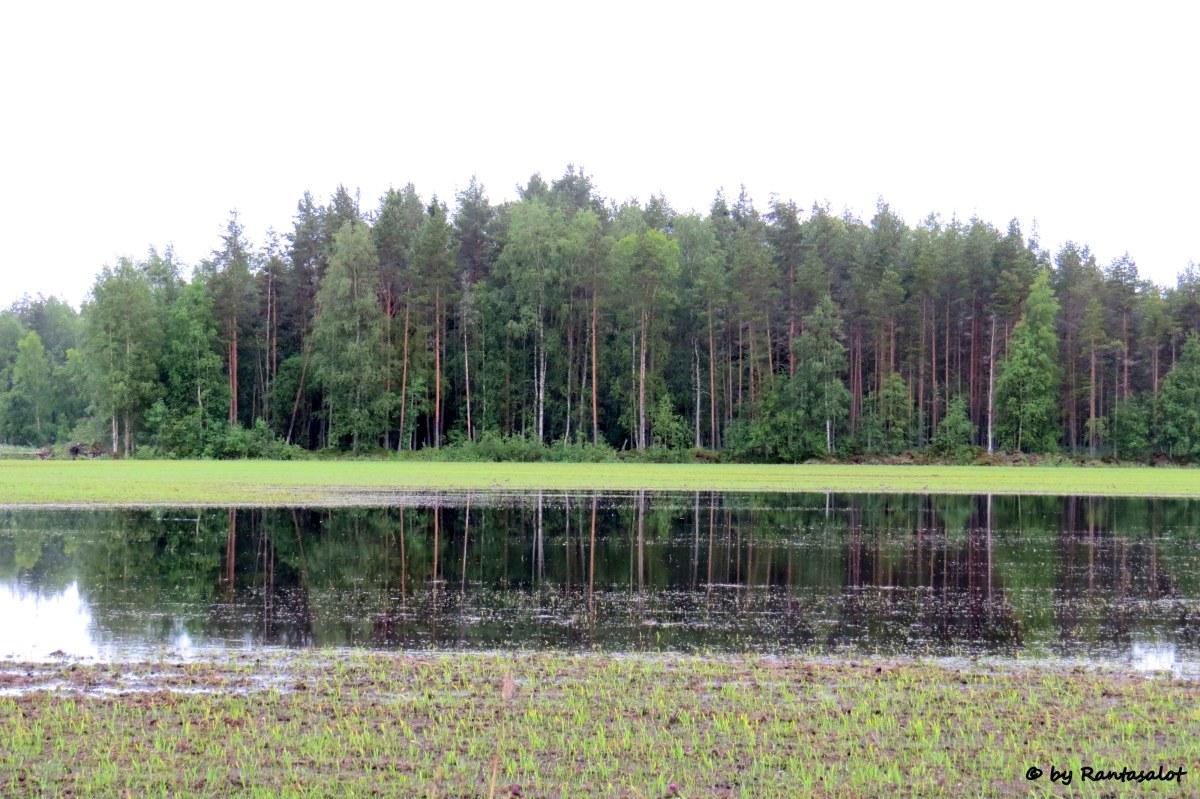 Vesi pellolla