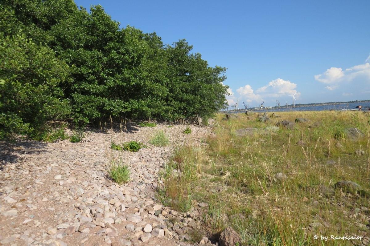 Rantapuut.jpg