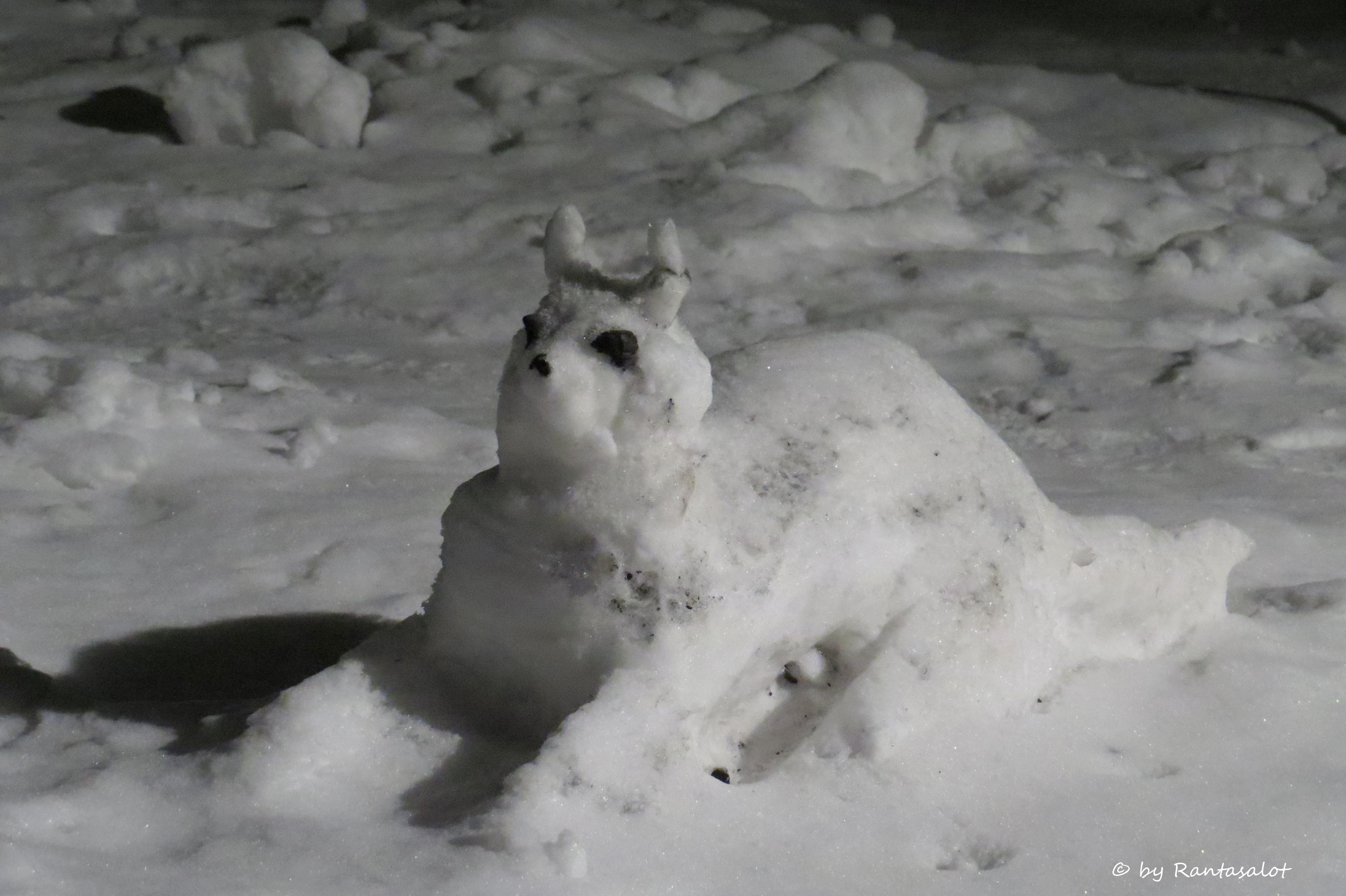 lumikissa