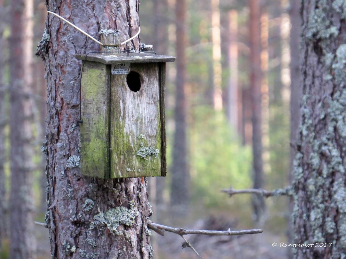 IMG_8556 Linnunpönttö