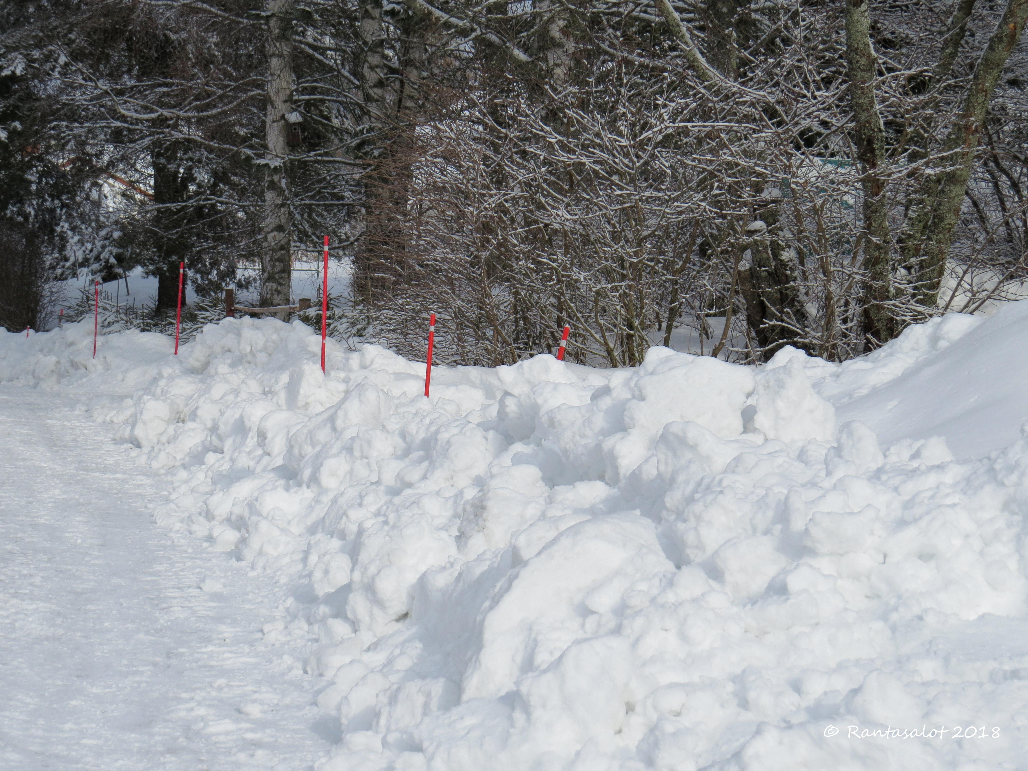 IMG_8884 snow.jpg