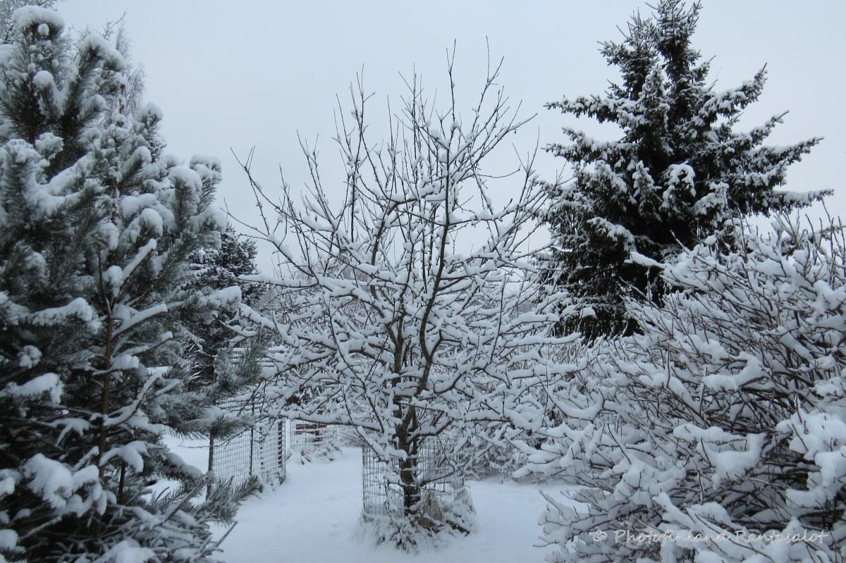 img_7009 takapiha lumi