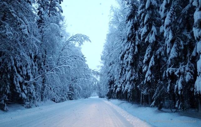 lumi kuuset 1 tämä