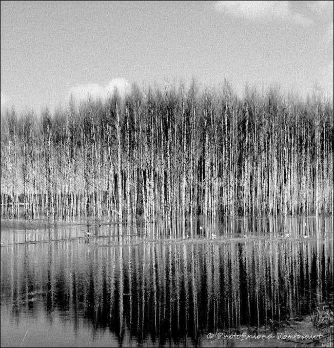 IMG_3249 MV Reflections