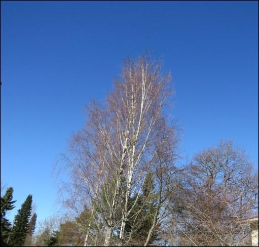IMG_9786 Sininen taivas