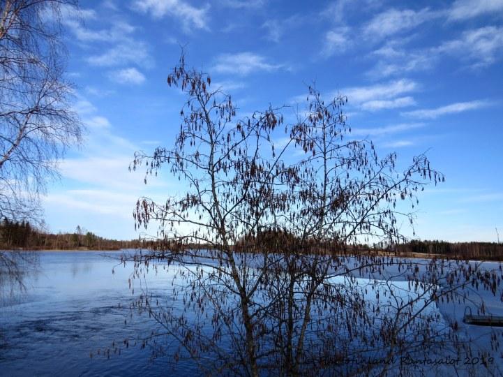 IMG_9861 Leppä ja järvi
