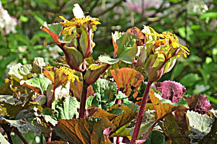 IMG_0581 Syksyn värejä, nauhus