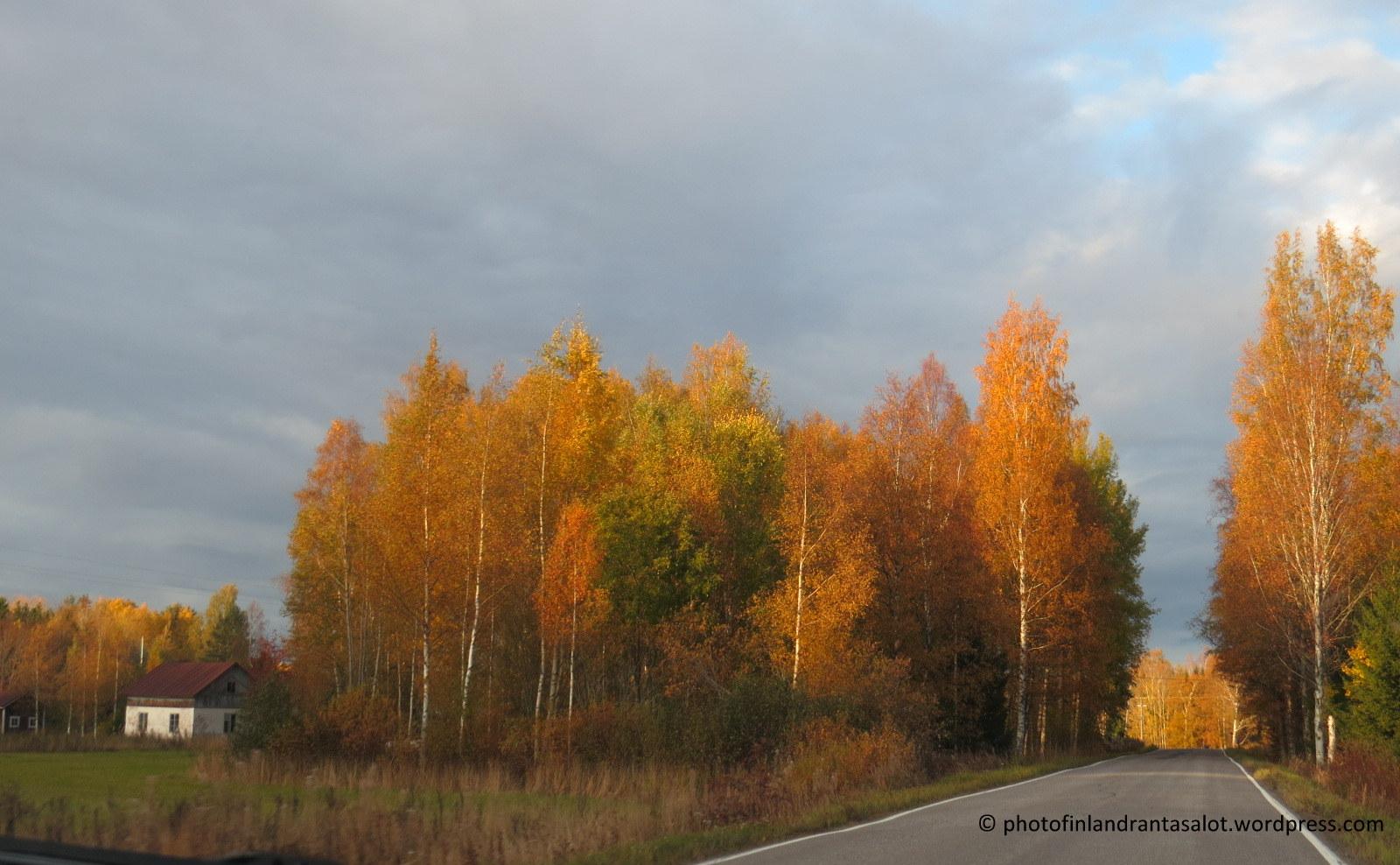 IMG_0039 Tiellä ruska. atomivoima