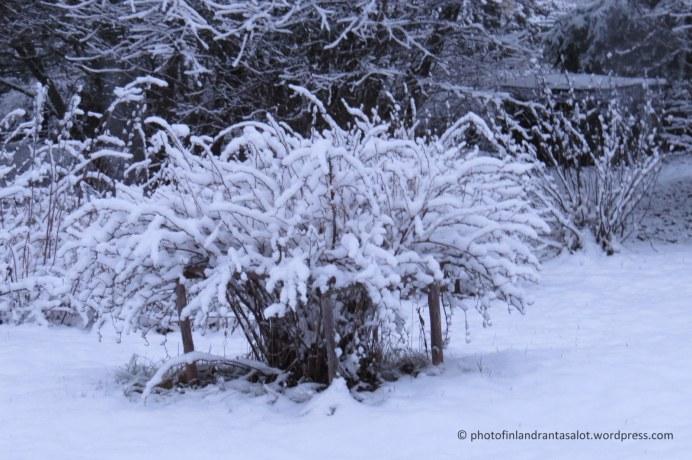 IMG_0124 Karviaispensas lumessa