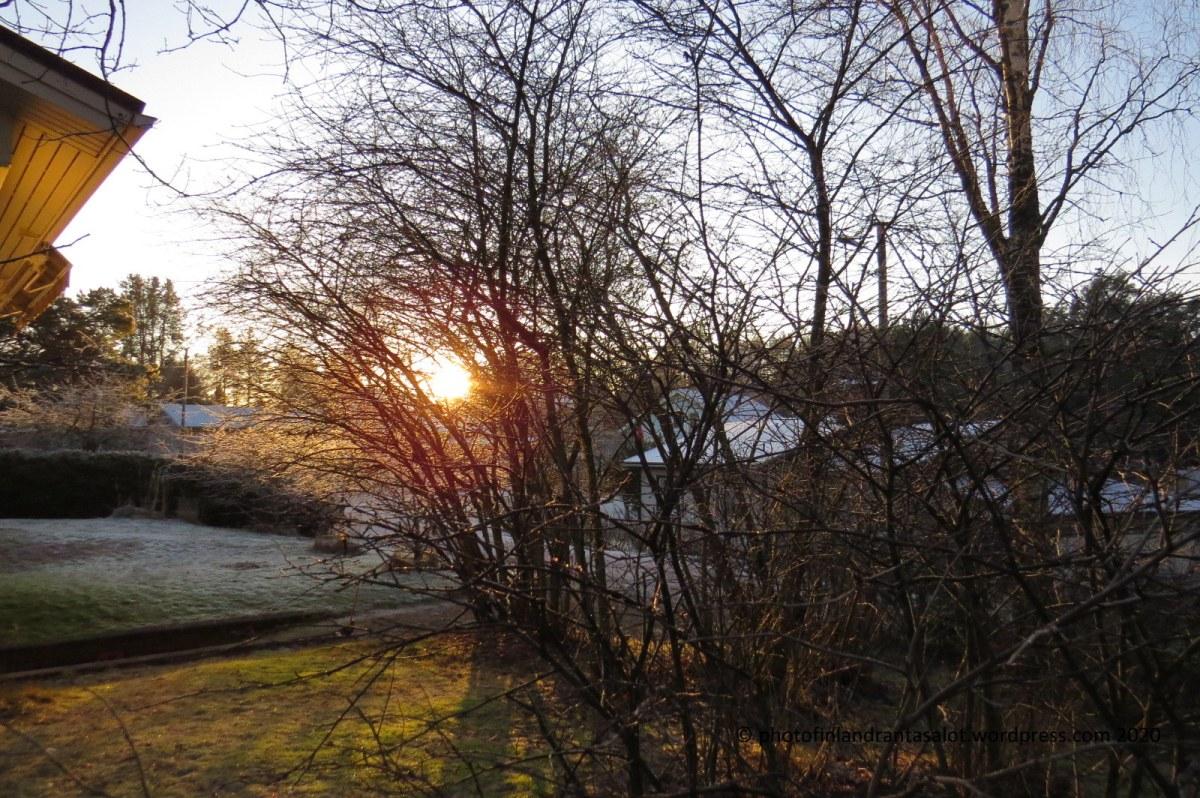 IMG_0149 aurinko puiden takana piha