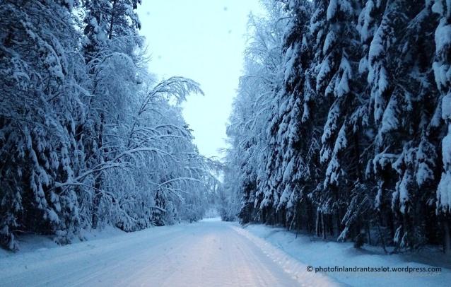 Lumi kuuset 1 tämä tammikuu 2019.jpg