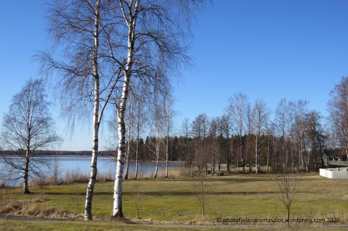 IMG_0174 Lavia Karhijärvi näkymä oikella koivut