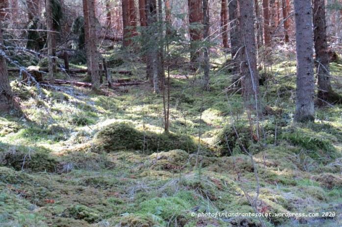 IMG_0336 Metsänpohja
