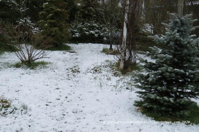 IMG_0356 Piha lumessa